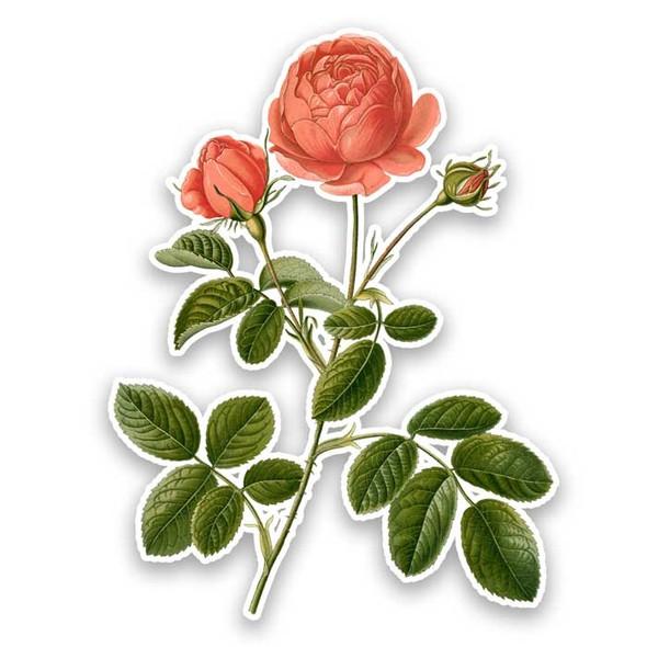 Vintage Die-Cut | Tangerine Rose
