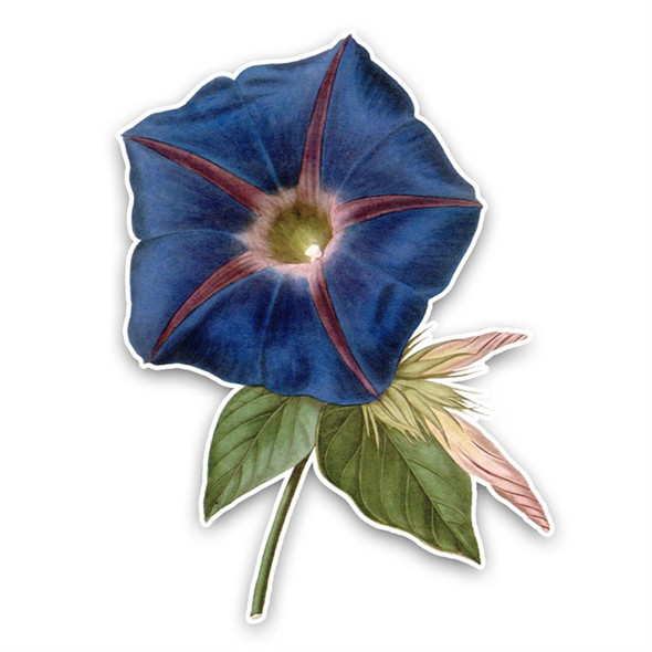 Vintage Die-Cut | Morning Glory