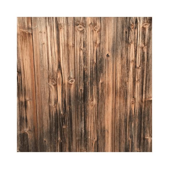 Paper | Pine Tree 2