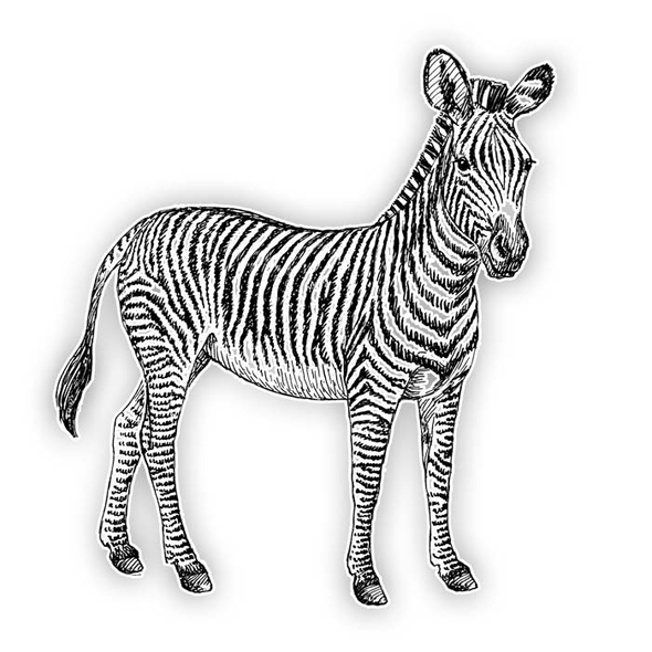 Vintage Die-Cut | Zebra