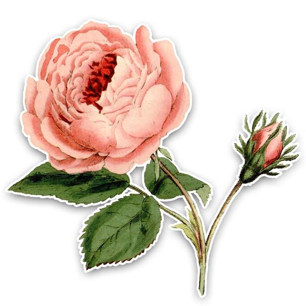 Vintage Die-Cut | Provence Rose 1