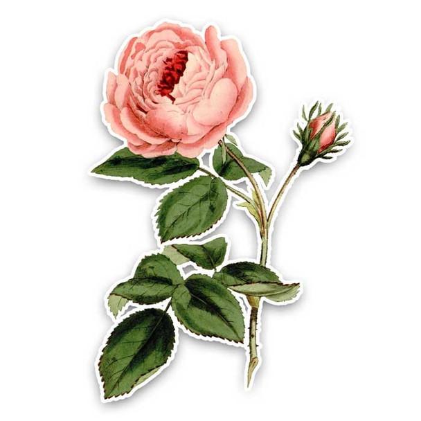 Vintage Die-Cut | Provence Rose 2