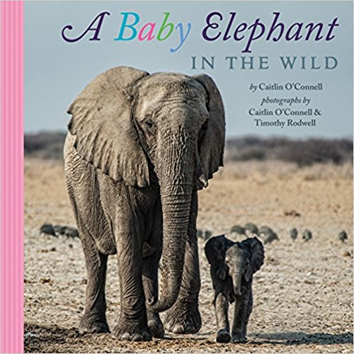 A Baby Elephant in the Wild (Hard Cover) by Caitlin O'Connell