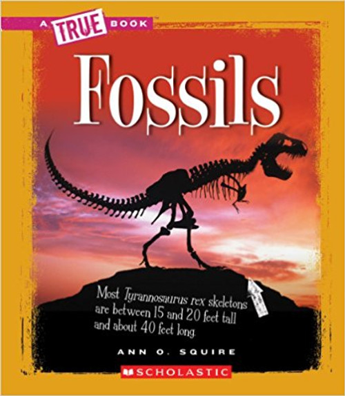 Fossils by Ann O Squire