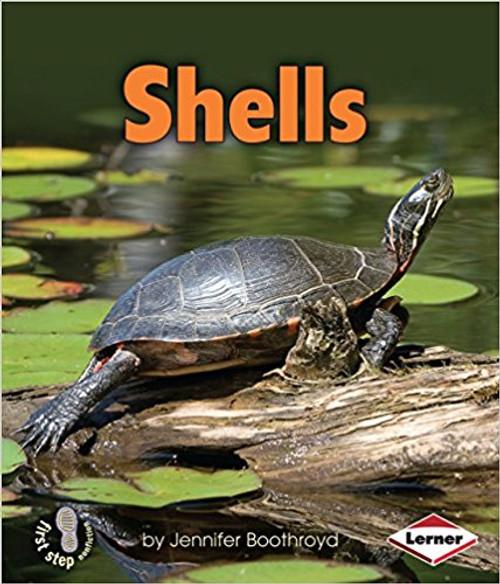 Shells by Jennifer Boothroyd