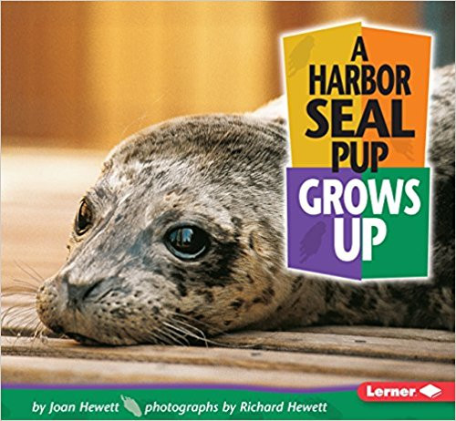 A Harbor Seal Pup Grows Up by Richard Hewett