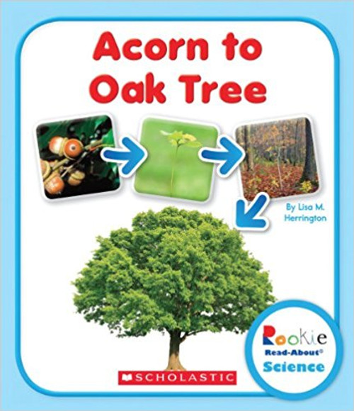Acorn to Oak Tree by Lisa M Herrington