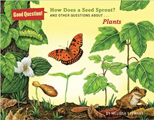 How Does a Seed Sprout?: And Other Questions about Plants by Melissa Stewart