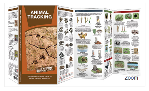 Animal Tracking- A Waterproof Folding Guide