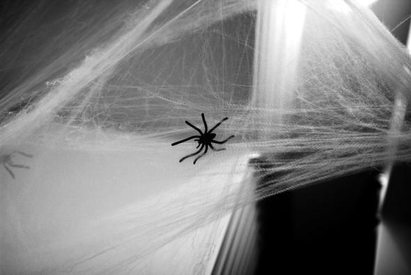 Stretchable Spider Web Halloween Decoration Haunted House Cobweb Home Decor