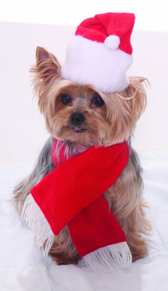 Santa Hat & Scarf Christmas Pet Costume Set Red White Dog Cat Holiday Clothes
