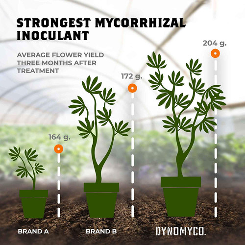 HIGH PERFORMING STRAINS: DYNOMYCO Mycorrhizal Fungi Inoculants contain unique fungal strains which develop robust beneficial symbiotic relationships with plant roots. DYNOMYCO contains a blend of strains sourced worldwide, including especially vigorous strains from the harsh conditions of the Israeli desert. Your plants benefit from enhanced capacity to cope with stress, such as suboptimal soil pH levels.