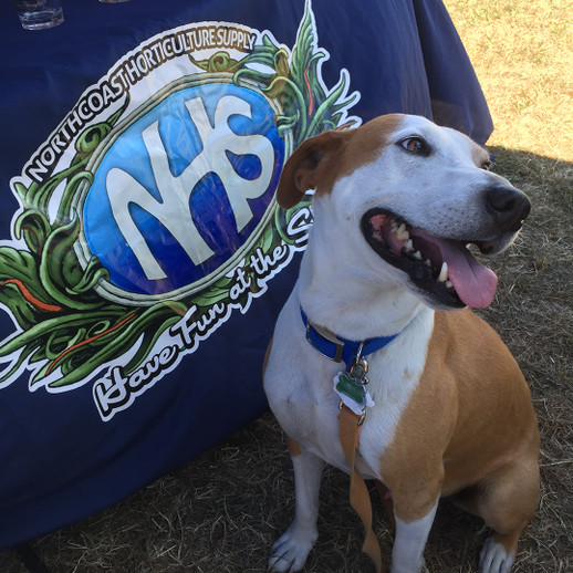 NHS Attends Woofstock