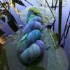 Meridian Water Lilies