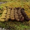 Meridian Gradient Set Bears Love Honey