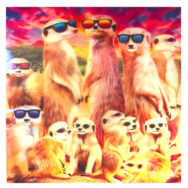 3D LiveLife Holographic Large Greeting Card - Cool Meerkats