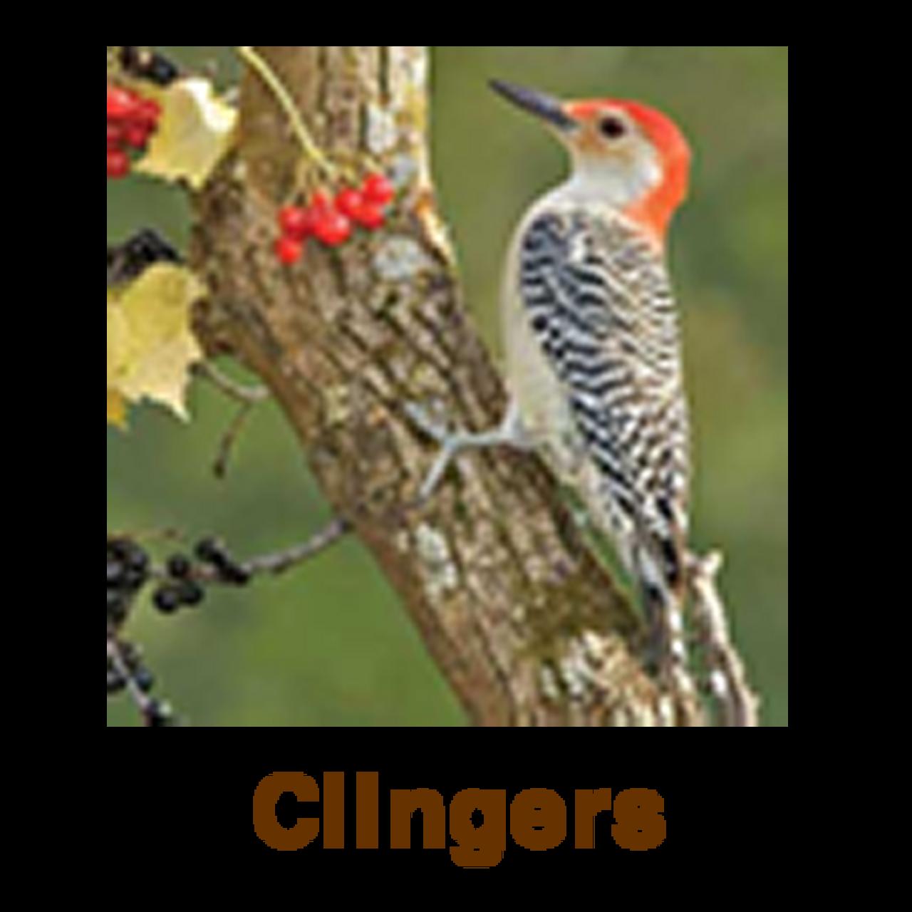 Clingers