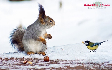 Winter is Here! Make sure your Birds and Critters have plenty of Food and Water.