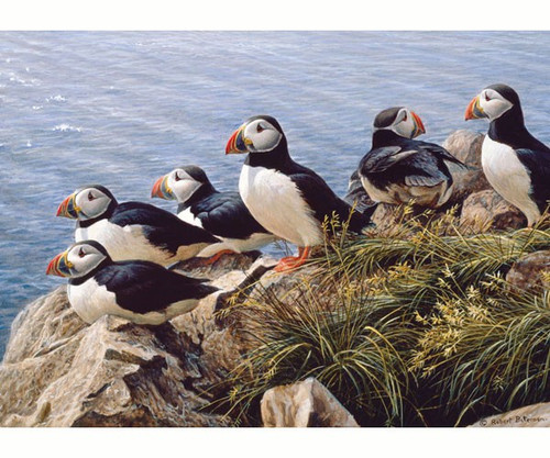 OUTSET MEDIA GAMES - Bright Day (Puffins) - 1000 Piece Jigsaw Puzzle (OM80078) 625012517676