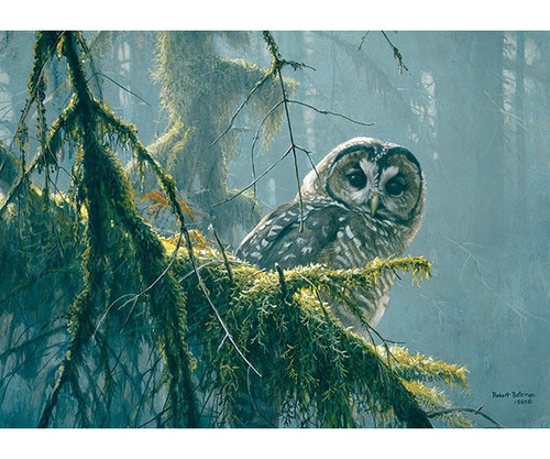 OUTSET MEDIA GAMES - Spotted Owl Mossy Branches - 500 Piece Jigsaw Puzzle (OM85002) 625012850025