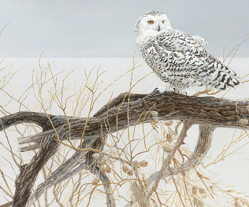 OUTSET MEDIA GAMES - Fallen Willow Snowy Owl (Winter) - 500 Piece Jigsaw Puzzle (OM85031) 625012520843