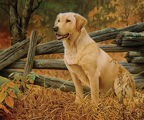 OUTSET MEDIA GAMES - Man's Best Friend (Dog) - 500 Piece Jigsaw Puzzle (OM85032) 625012520911
