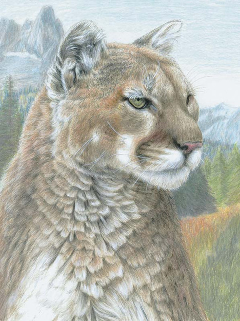"""ROYAL BRUSH - """"Cougar"""" Colour Pencil by Numbers Kit (CPN17) 090672943576"""