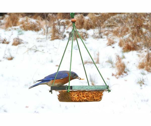 SONGBIRD ESSENTIALS - Hanging Mealworm Dish Feeder Bird Feeder (SE517) 645194005174