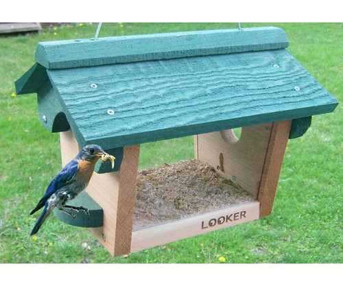 SONGBIRD ESSENTIALS - Bluebird Meal Worm Bird Feeder (SE557) 645194005570