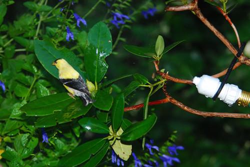 SONGBIRD ESSENTIALS - Easy Water Mister for Birds (SE7019) 645194701908