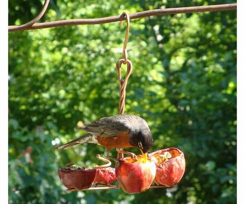 SONGBIRD ESSENTIALS - Apple AnchorOrioles Fruit and Jelly Bird Feeder (SEHHANCR) 645194000988