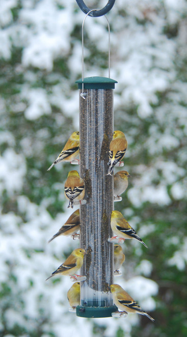 ASPECTS - Quick Clean Tube Bird Feeder - Spruce Nyjer Med (ASPECTS427) 026451124270
