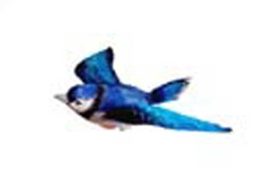 CLARK COLLECTION - Blue Jay Window Magnet (CC52008) 816667520085