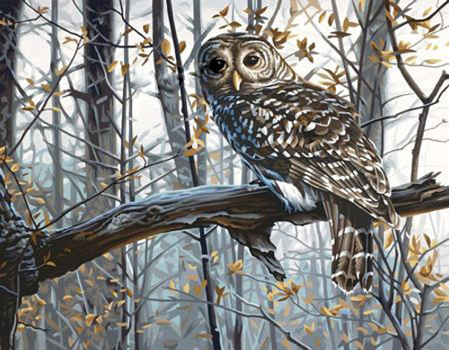 DIMENSIONS - Wise Owl - Paint By Number Craft Kit (91428) 088677914288