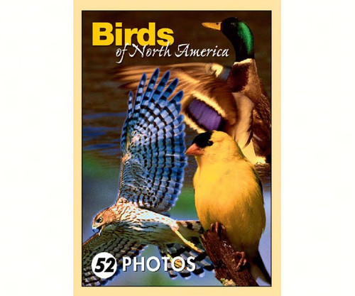 IMPACT PHOTOGRAPHICS - Birds of N.A. Mini Playing Cards (IMP163PLS) 802285028041