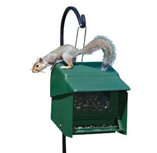 Feeders - Squirrel-Resistant