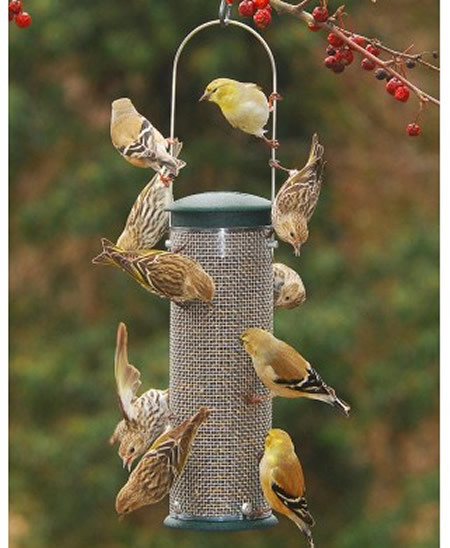 Feeders - All Bird Feeders