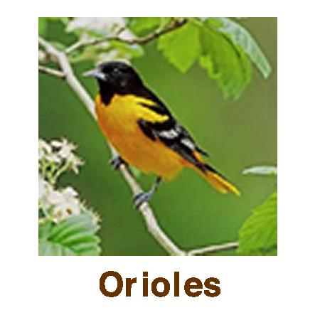 Orioles