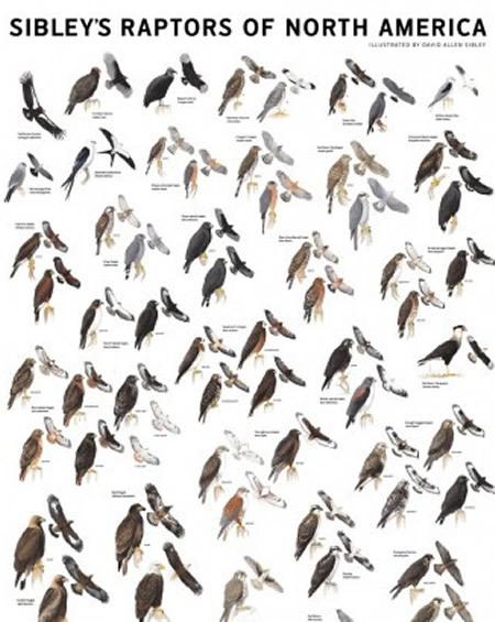 Posters - Wildlife