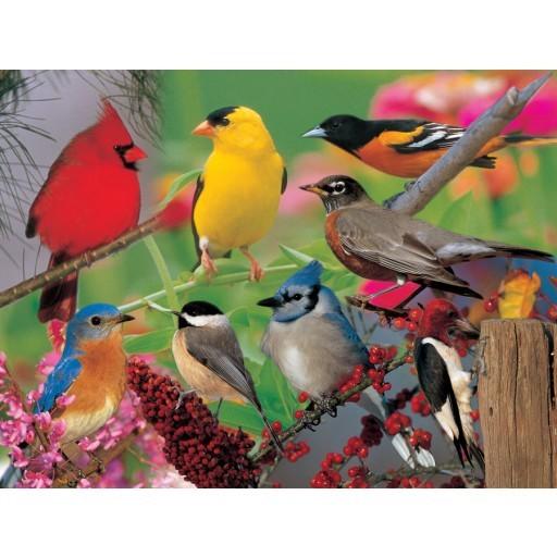 Jigsaw Puzzles - Wildlife, Audubon, Nature