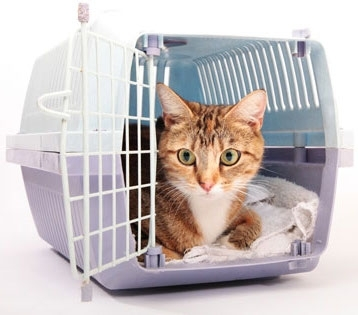 Cat Crates, Travel Carriers & Containment