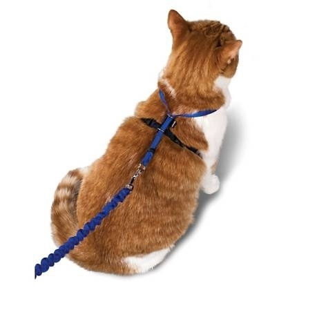 Cat Collars, Leashes, Harnesses