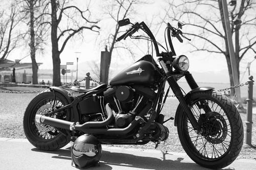 Flitz is at Harley-Davidson's 115th Anniversary!