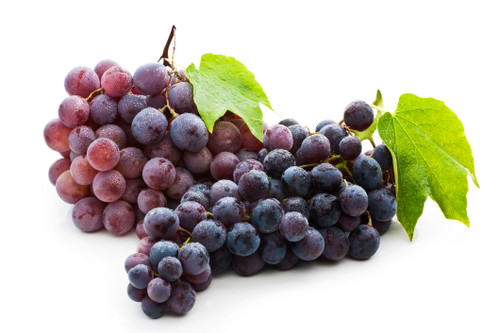 Grapes are an amazing treat for your feathered friend! Serve alone or mixed in with your bird's favorite chop and mash.