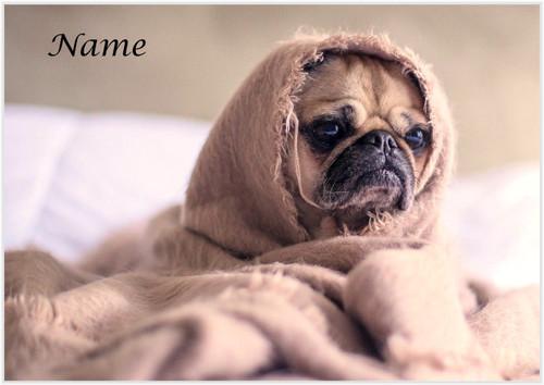 Pug in a Blanket - Personalised