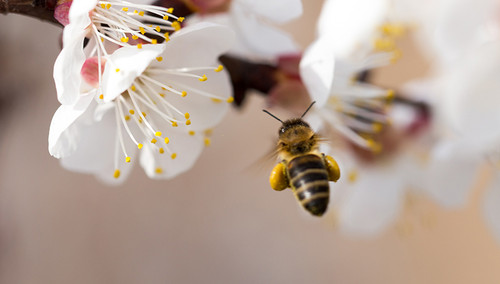 Why We Need (and Love!) Honey Bees