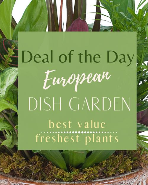 Deal of the Day European Dish Garden