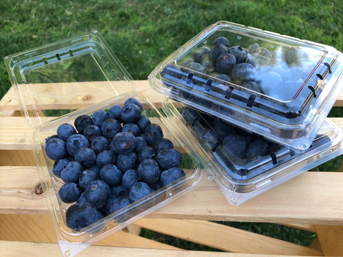 Blueberry 3-Pack
