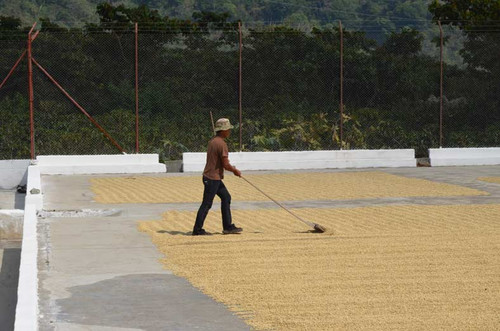 Bringing you ever closer to our farmers and producers, we are simply the intermediary in sourcing the best quality of specialty coffee available and preparing it just right for you to enjoy.
