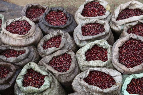 Like the sight? Its the sight of a lot of efforts made by our farmers in giving you the best quality. However you want to make your coffee, espresso, Turkish, 'American' or else, we have you covered.